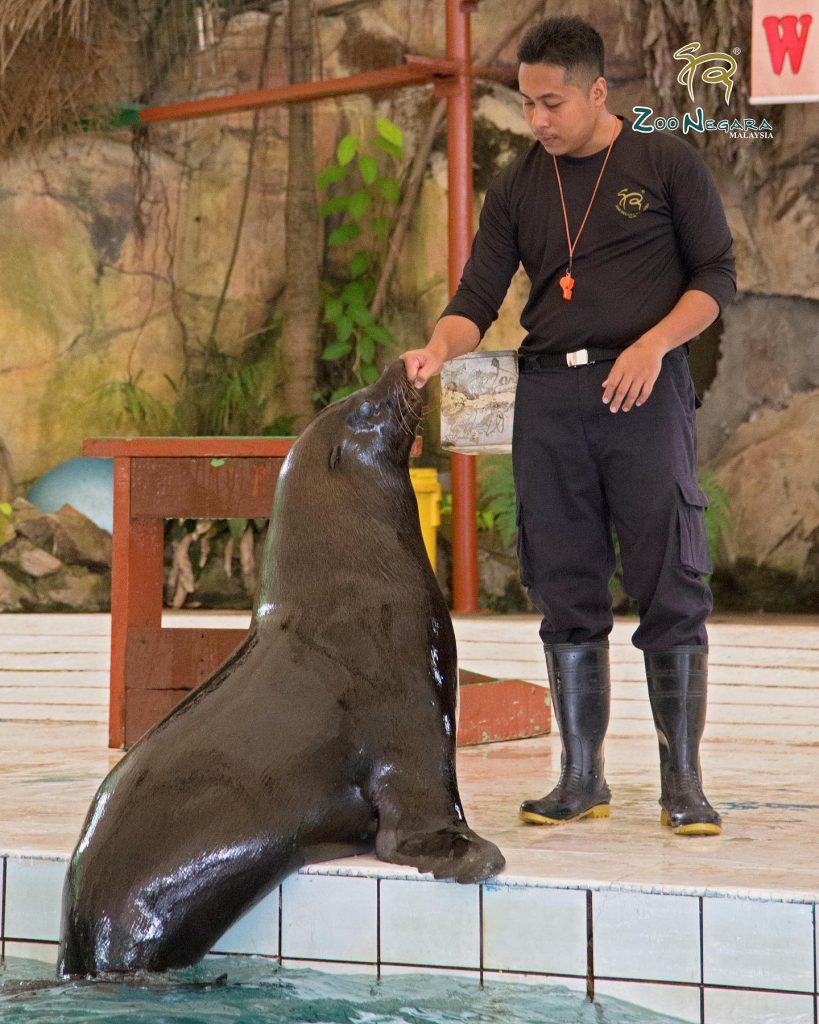 lawatan maya zoo negara