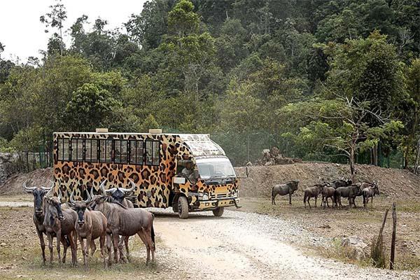 Gambang Safari